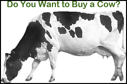 Buying a Cow!